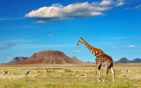 African savanna with giraffe and grazing antelopes